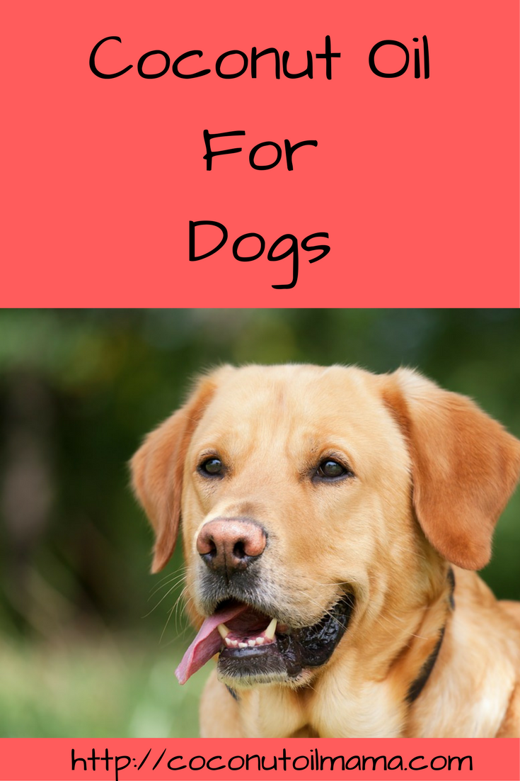 Coconut oil for dogs for Can you give your dog human fish oil capsules